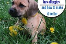 Dogs,illnesses,allergies n cures