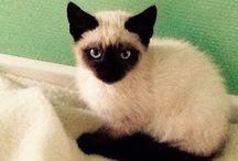 Killinger / Jeg elsker katte det var derfor jeg syndes at der skulle være denne opslagstavle