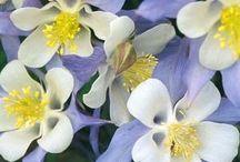 Perennial flowers / by Cheryl Yacovoni