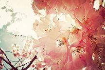 Love of Nature / Scenery I love