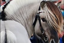 Horse fiord