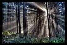TREES! / by Hannah Morrison