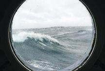 Le loup de mer
