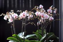 FlowerBoard<<3