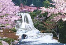 Dream Gardens!