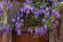 Nature - Spring Scent