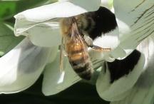 Bees / http://www.thewovengarden.com/
