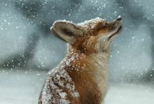 『Fox』
