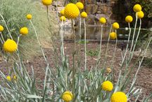 abbi garden