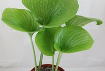 Exotic Plants ID