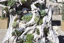 steinpflanzen