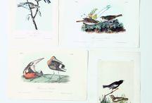 2014-1 Charles J. & Mary Scarlett Pennock Audubon's Birds of North America Virtual Auction
