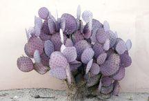 Colour - Lilac