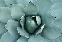 Inspiration--Plants & Flowers