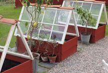 Eco - School