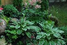 Shade Lovers / Have a super shady spot in your yard? these plants will grow well in those areas.