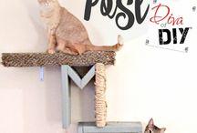 All things Kitten