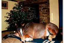 Merry Christmas Ponies / The best horses Christmas wishes for everyone
