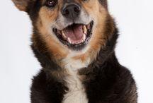 Tandpleje hos hunde