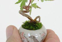 Bonsai, Fairy Gardens, & Stepping Stones