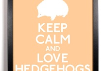 91 Hedgehogs