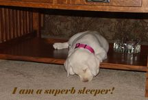 Sleep / Seattle Hypnosis with Roger Moore can teach you the skills for superb sleep. Visit www.seattlehypnosisnow.com
