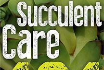 suculentas / plantas resistente