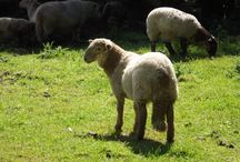 Animals of Mitcheldean / Some of the wildlife and animals in Mitcheldean, Gloucestershire
