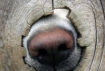 animal :)