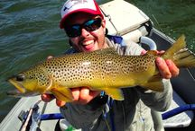 Fall Fly Fishing In Montana / It's hard to beat the pursuit of wild trout in the fall in Montana. We have the latest fishing reports, fall fishing gear, and of course, your fall fishing photos in Montana!