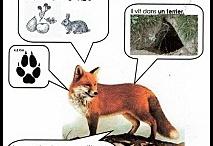 fiche animaux