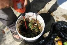Composting / by Cindel M.