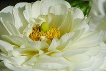 kwiaty zdjęcia