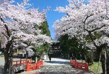 日本の景色 - japanese scenery -