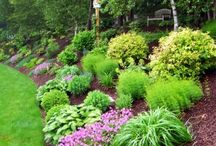 Front yard ideas / by Gretchen Levy