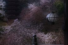 風景、花 / travel