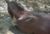 Our Horses / Our beloved equines, their trials & triblulations.