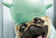 Dog dog dog❣