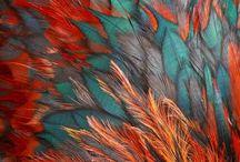 feather of bird spead