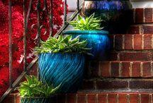 Flowers, Plants, Shrubs, Trees / by Robin Tuss Defoe