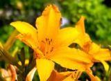 Hidden Garden Treasures - Talks and Demonstrations Saturday 18th June