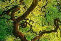 Fotos árboles