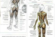 Exercises / muscle and trainings shedules