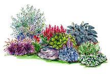 gör en vacker trädgård