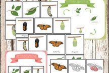 Motýľ cycle