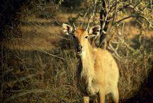 Sariska National Park and Tiger Reserve / Animal Kingdom at Sariska Alwar