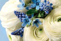 Flowers / by Carol Browne