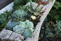 succulents / great ideas for using succulents in your garden