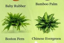 Houseplants that cleans the air