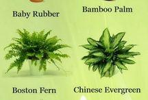 wnętrze rośliny